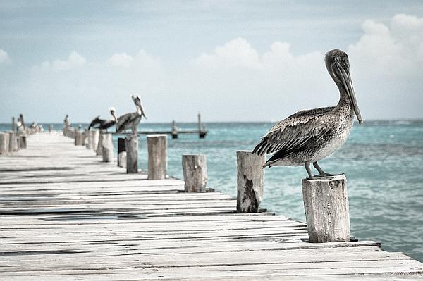 Was erwarten Sie von diesen Pelikanen?